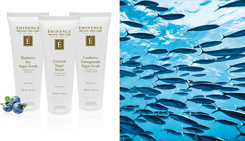 Eminence Organics Sugar Scrubs and fish in ocean water