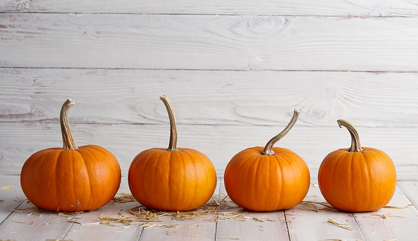 Four Pumpkins lined up against light grey background