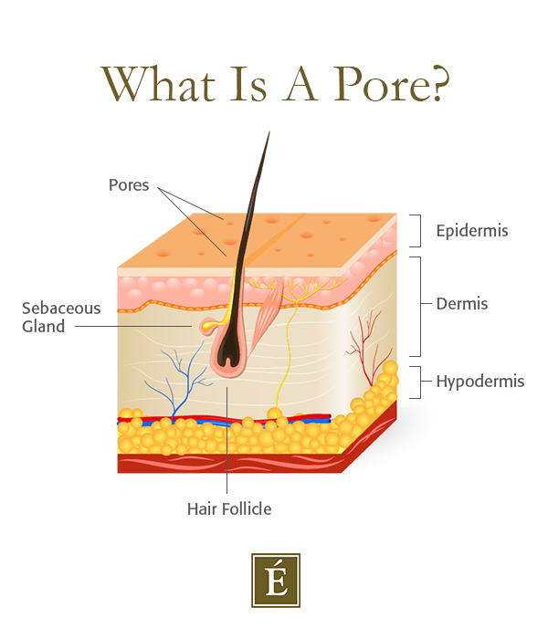 pore cross-section