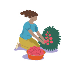 woman-planting-graphic