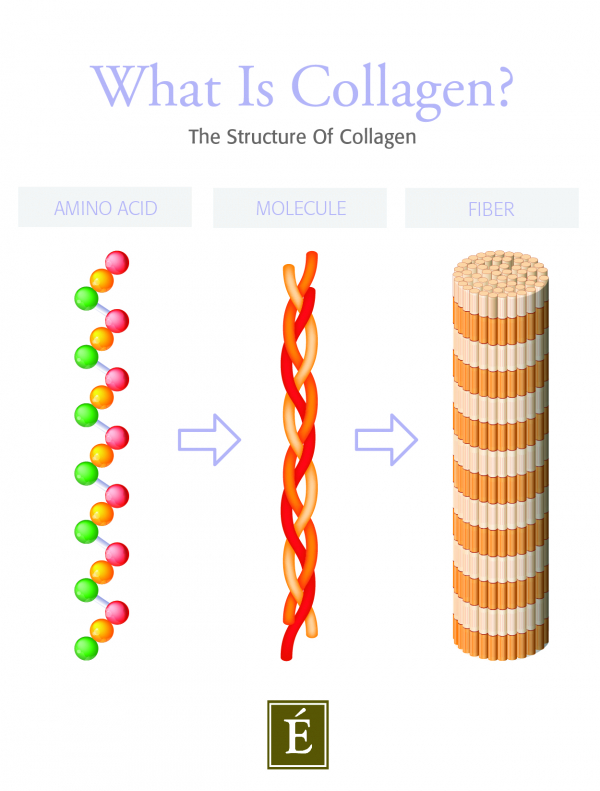 collagen structure graphic
