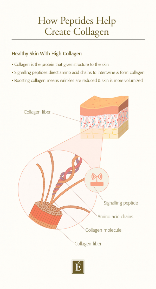 How peptides help create collagen