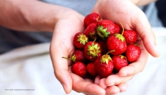 The Ultimate Guide To Summer Berries