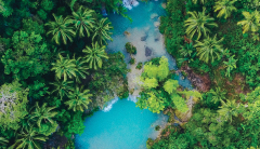 aerial view of trees and water
